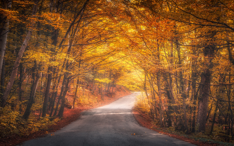A Guide To Autumn Driving