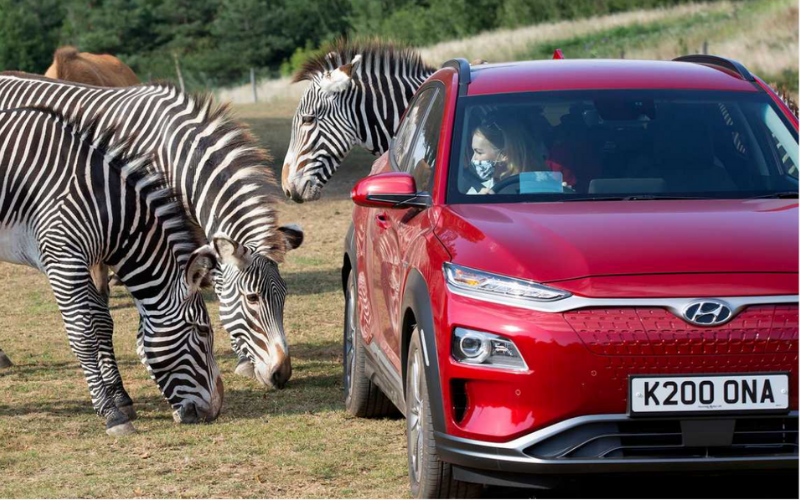 Hyundai Kona Taking Families on a Wild Ride