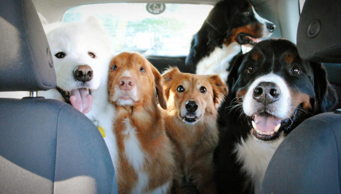 Top 5 Cars for Dog Owners